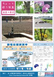 彩り新聞 第29号うら