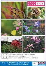 彩り新聞第42号_裏面