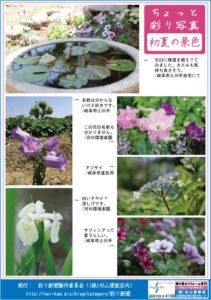 彩り新聞第46号_裏面
