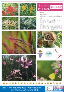 彩り新聞第54号_裏面